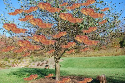 bacon-tree.jpg