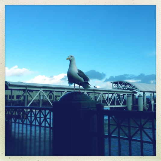 A new friend outside the Ferry Building