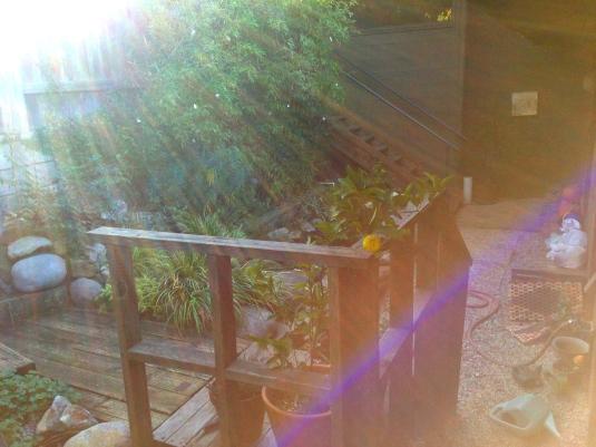 Koi pond, bamboo & yuzu tree