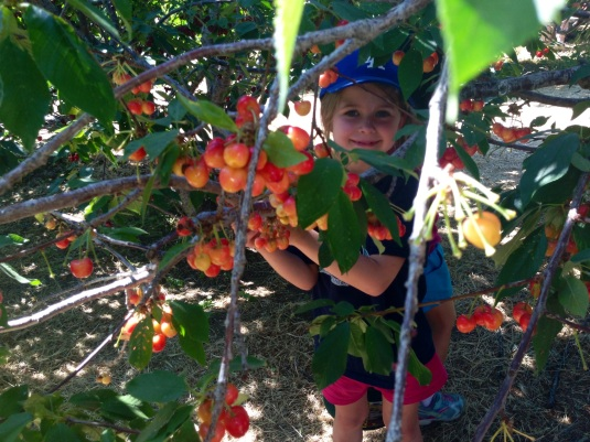 Willa picking cherries
