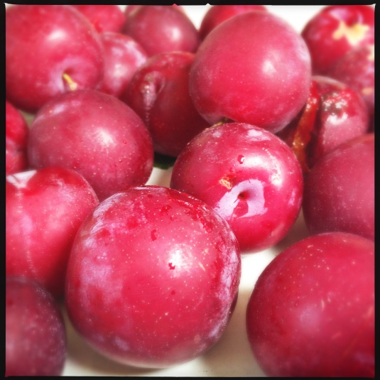 Plums as far as the eye can see.