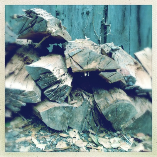 My nascent woodpile