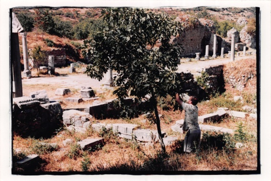 Foraging for wild figs at Ephesus