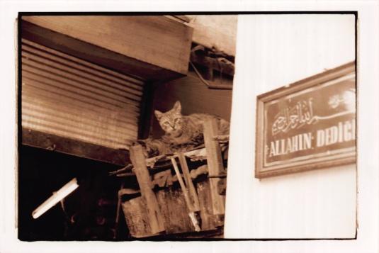 Cats in the Grand Bazaar
