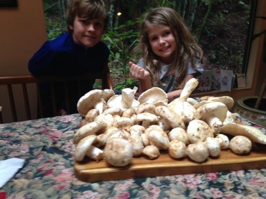 Kids and their matsutake haul
