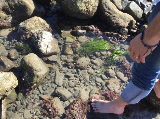 Tidepooling in Malibu